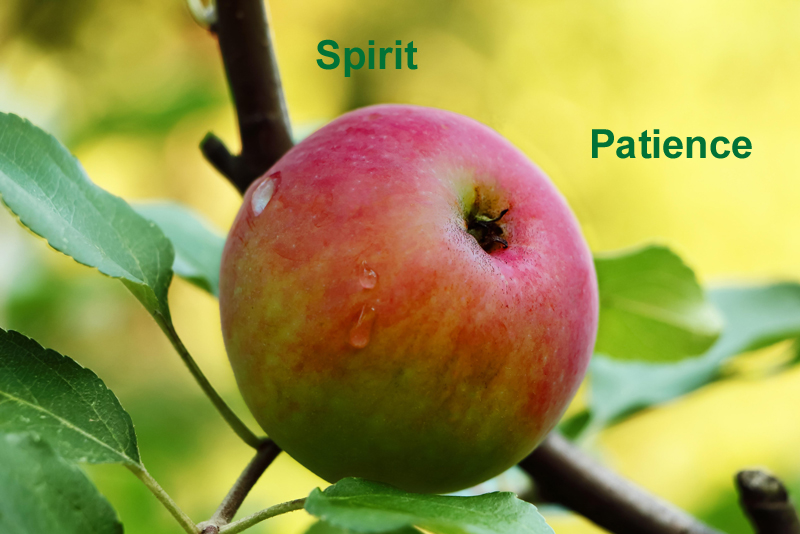 Patience - A Fruit of the Spirit