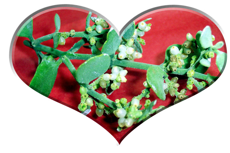 Mistletoe - A Christmas Superstition