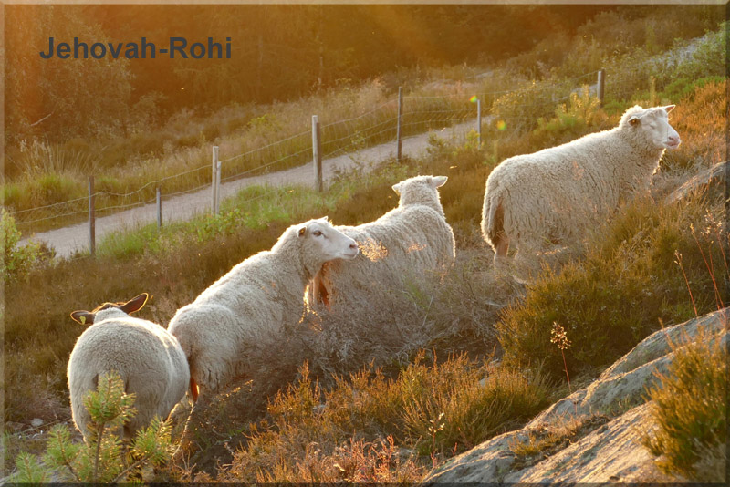 Experiencing the Shepherd - Jehovah-Rohi